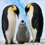 Penguin Class