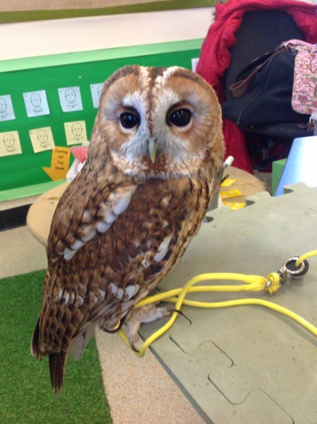 Arthur Owl