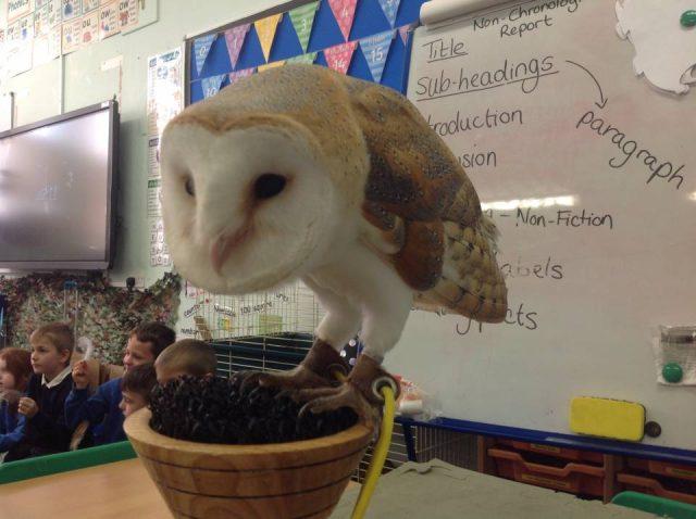 Jonny Owl